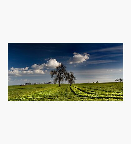 The Field Photographic Print