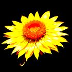 Yellow Sunshine by Sally Haldane
