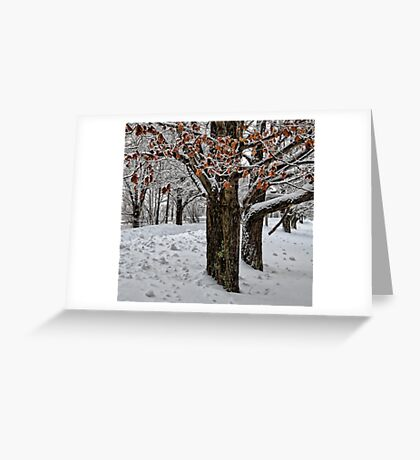 Maple Trees - Holding Onto Their Color Greeting Card