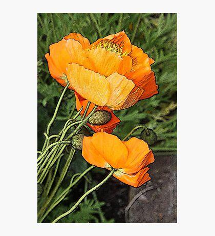 Orange Wonders Photographic Print