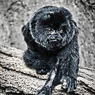 Marmoset by gabriellaksz