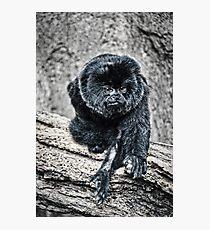 Marmoset Photographic Print