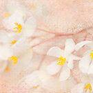 Textured Begonias by Beth Mason