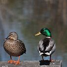 Ducks on a Dock by Renee Blake