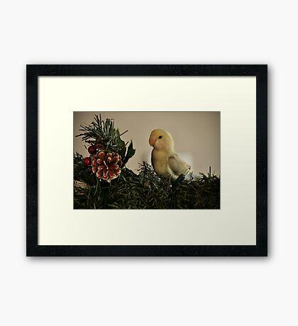 Love Bird Framed Print