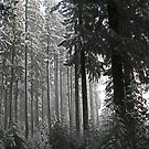 Snowing on Moon Falls Trail  by Chuck Gardner