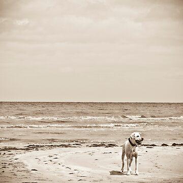 At The Beach by pvillani