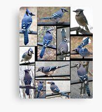 Jazzy Blue Jays 3 Canvas Print