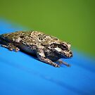Sliding Toad by KBritt