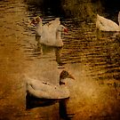 Geese by pennyswork