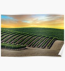 Golden Skies over Napa Valley Poster