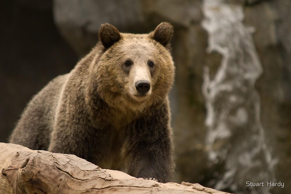 San Diego Zoo - Bear by Stuart  Hardy