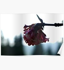 Already in bloom Poster