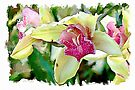 Orchid watercolour by PhotosByHealy