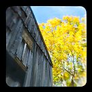 the old barn by Jason Platt