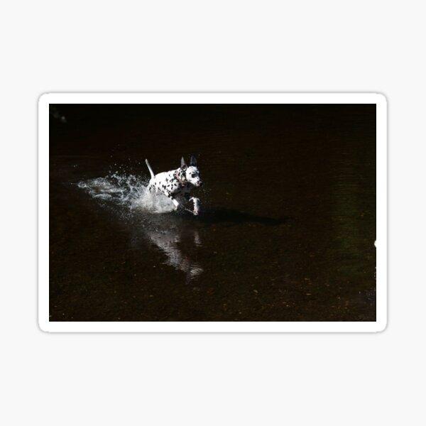Dalmatian running in water Sticker