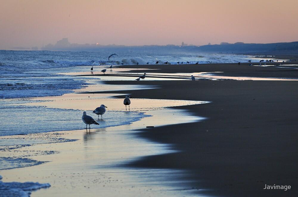 Seagulls on the beach at Wassenaar Holland by Javimage