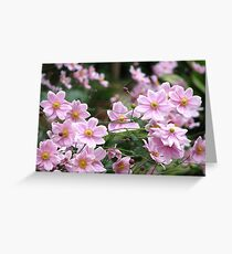 Pink Windflowers! Greeting Card