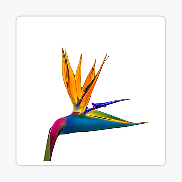 Bird of Paradise Flower (colour paint) Sticker