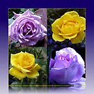 Exquisite Roses Collage von BlueMoonRose
