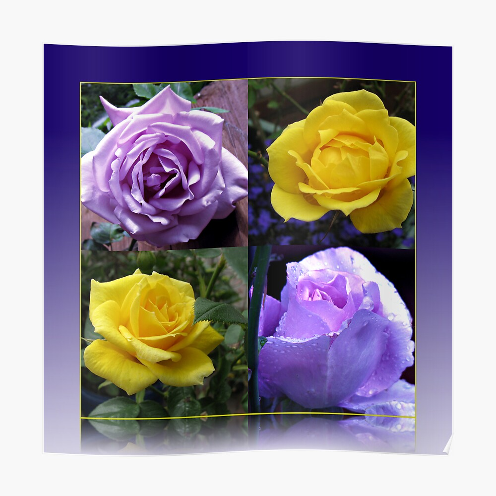 Exquisite Roses Collage Poster