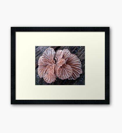 NATURE'S JEWELRY - SHELF FUNGUS GILLS Framed Print