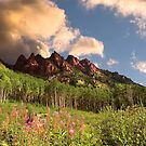 Aspen Forest by Endre