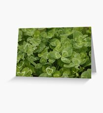 Clover/Shamrock Greeting Card