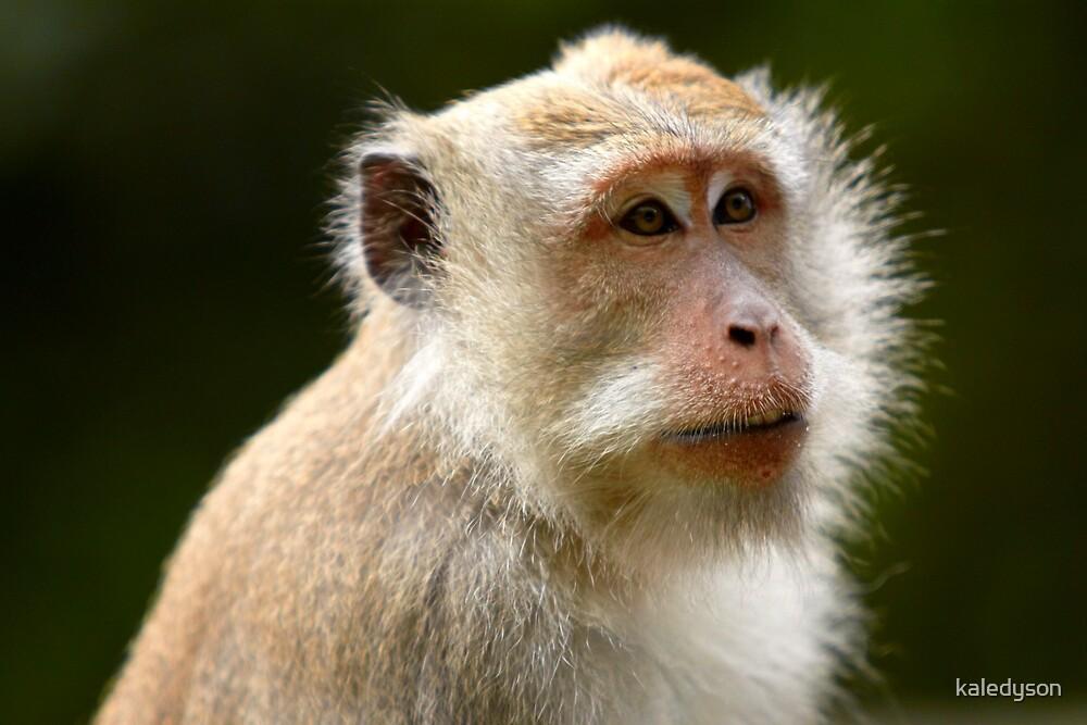 """Indonesian Monkey"" by kaledyson"