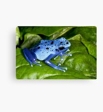 Blue Dart Surprise Canvas Print