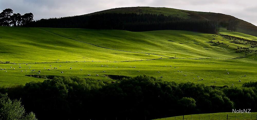 Green green grass of home by NolsNZ