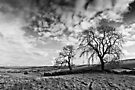 Two Trees - Black & White, Northumbria National Park. by David Lewins