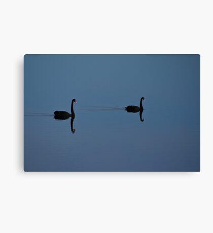 Black Swans Canvas Print