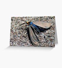 Virginia Ctenucha Moth Greeting Card