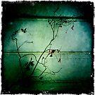 Twig by fourthangel
