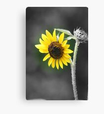Sunflower (Selective Coloring) Canvas Print