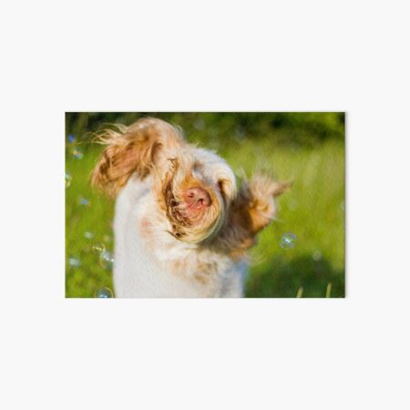 Let it loose Spinone Art Board Print