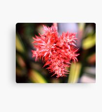 Red Plant Canvas Print