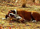 Giv'a Dog A Bone?  Now THATS What Ya Call A Bone!!! by NatureGreeting Cards ©ccwri