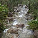 Mountain stream by Steven Guy