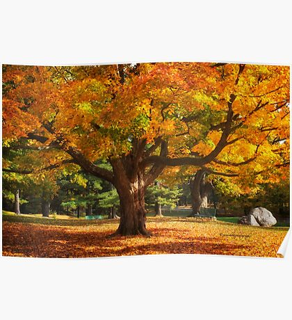 Autumn Colours 6 - MacKenzie-King Estate Poster