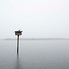 Seagull in the rain - Solo Point, Tacoma WA by A-N-E