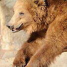 Grizzly Hanging Around by Joe Jennelle