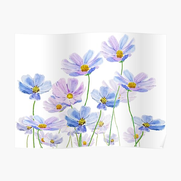 purple and blue cosmos flower watercolor Poster