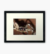 Huntsman Spider  Framed Print