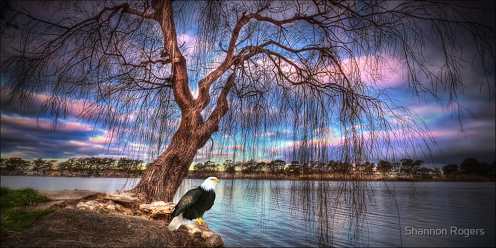 Eagle Eye View by Shannon Rogers