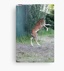 Entertaining himself Canvas Print