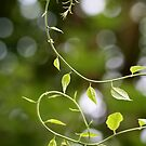 Twines with tree-bokeh by SylBe