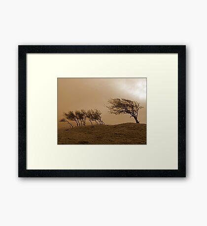 The Beacon Hawthorns Framed Print