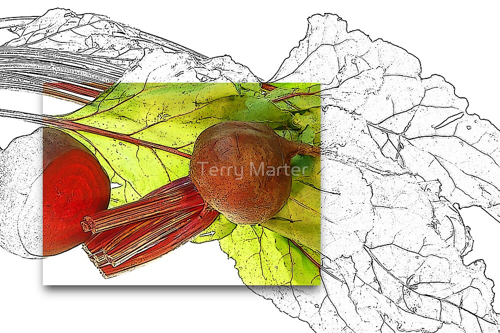 Beetroot by Terry Marter